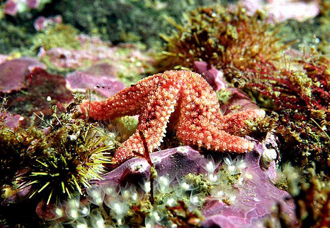 Морская звезда в дайв туре