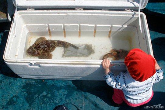 deep sea fishing kamchatka
